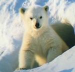 見てきました 見てきました!「北極のナヌー」