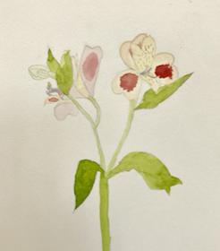 春のお花の観察画