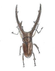 夏休みは昆虫を描こう!「自然物の観察画」アトリエぱおのサマースクール。