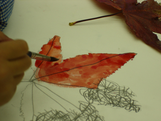 深まる秋の観察画